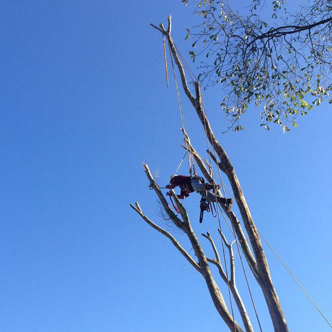 What sets our tree removal services apart?